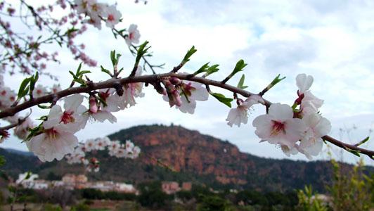 S'acosta la primavera al carraixet.