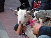 Benedicció dels animals