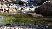 Plaques de gel al toll verd (diumenge 30 de gener).