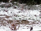 Animalets envoltats de neu