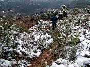 Caminant per la neu