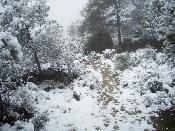Senda neva