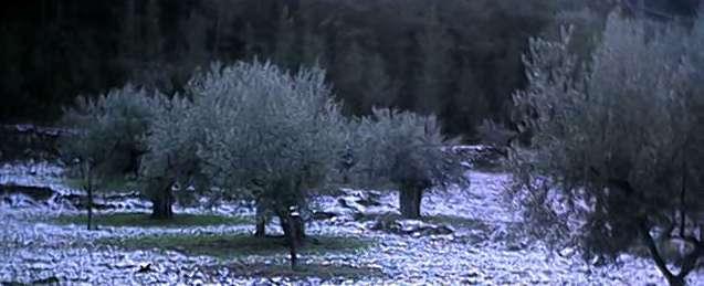 Camp d'oliveres baix del Castell del Rel 16-12-2001